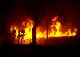 20100420213038-canaverales-quemados.jpg