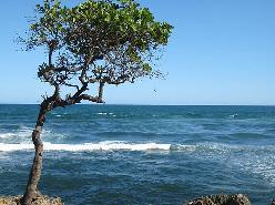 20100331232238-mar-caribe.jpg