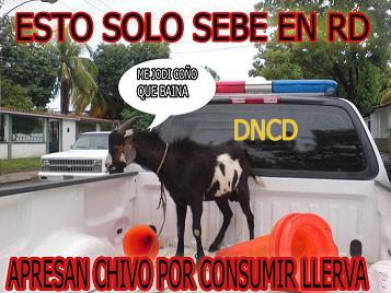 20110531001647-chivo.jpg
